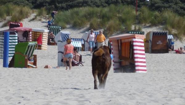 Hund am Hundestrand mit Strandkörben